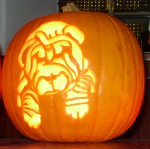 sharpei_puppy_pumpkin_flash_by_xplodvelt74